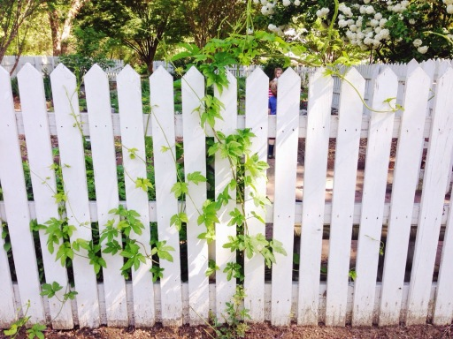 vines-on-a-gate