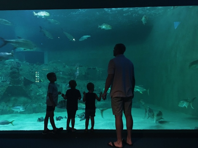 gazing-at-the-aquarium