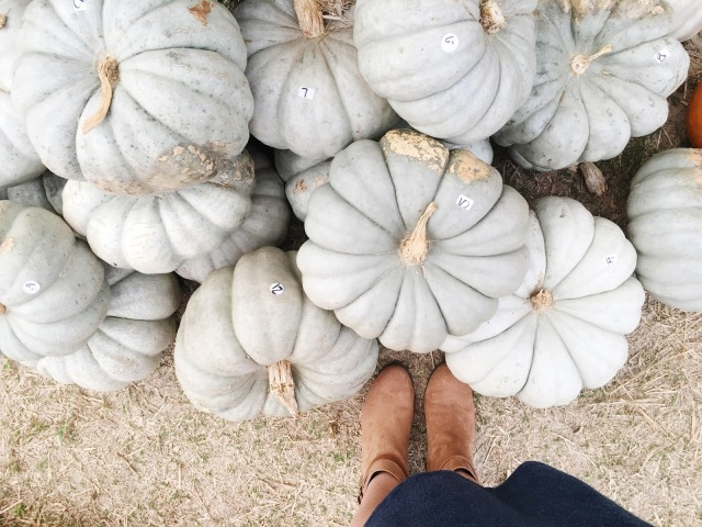grey-pumpkins