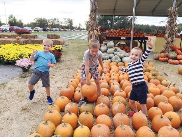 picking-pumpkins