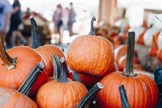 Farmers-Market-Fall-Family-Activity-19